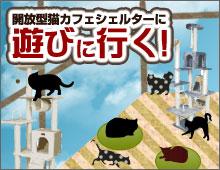 猫カフェシェルター