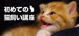 猫飼い講座